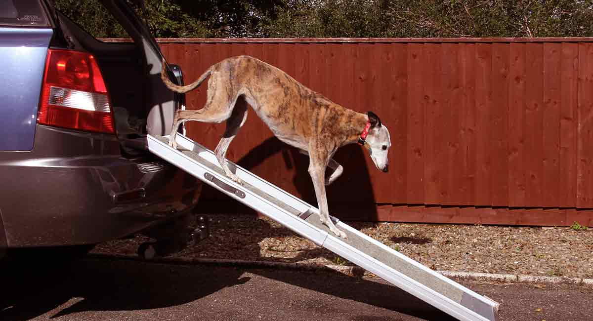 Best Dog Ramp - Reviews of Dog Ramps For Car, Bed, Stairs