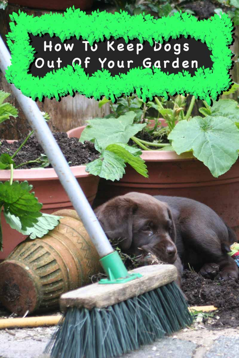 How To Keep Dogs Out Of Garden  Dog Repellents