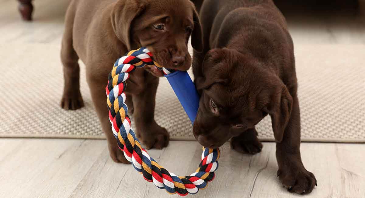 Best Indestructible Dog Toys For Labradors And Other Breeds