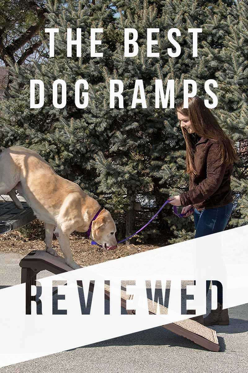 The Best Dog Ramps Reviewed - Great products for dogs.