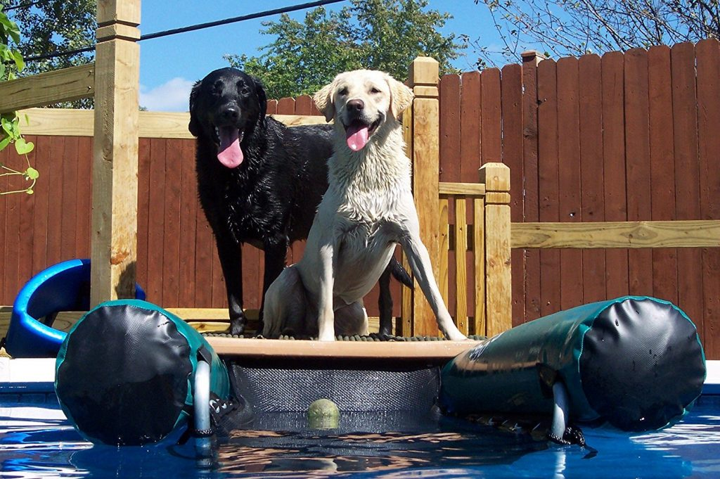 The Best Dog Ramps Reviewed Helping You To Make The