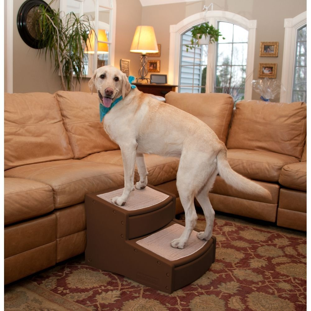 Best Dog Ramp Reviews Of Dog Ramps For Car Bed Stairs