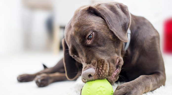 Best Dog Puzzle Toys For Lively Intelligent Pooches