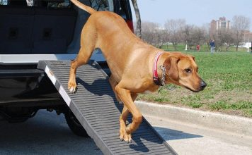 Best Dog Ramps