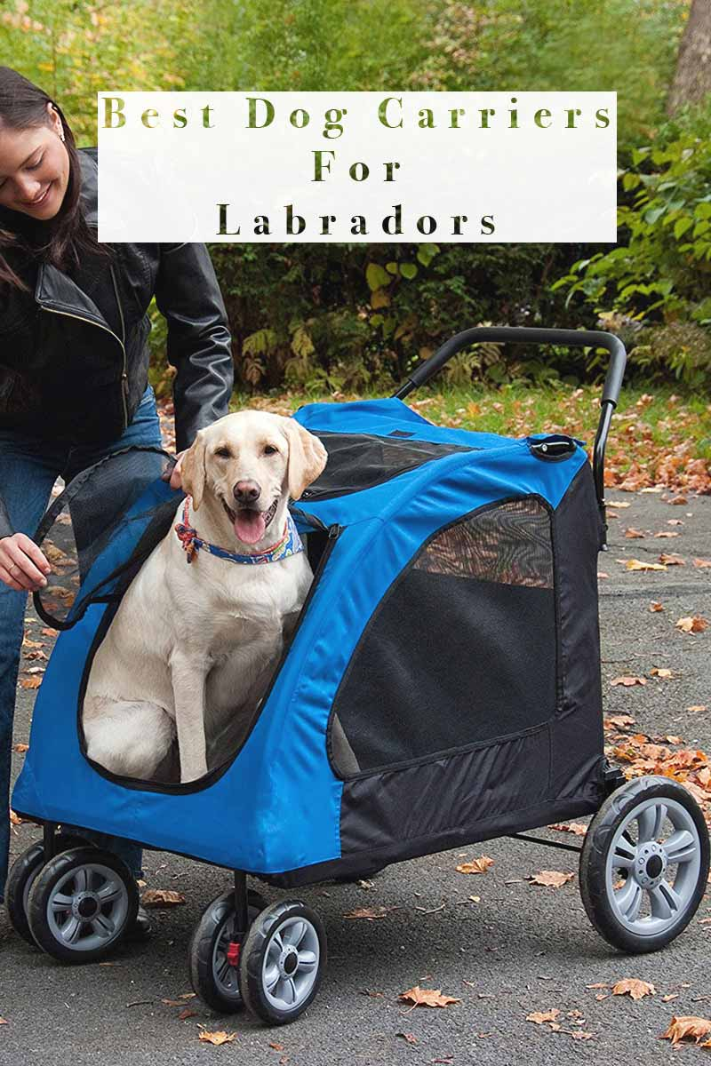 Best Dog Carriers For Labradors - Great products for labradors.