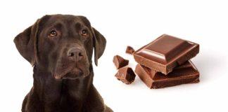 My Dog Ate Chocolate