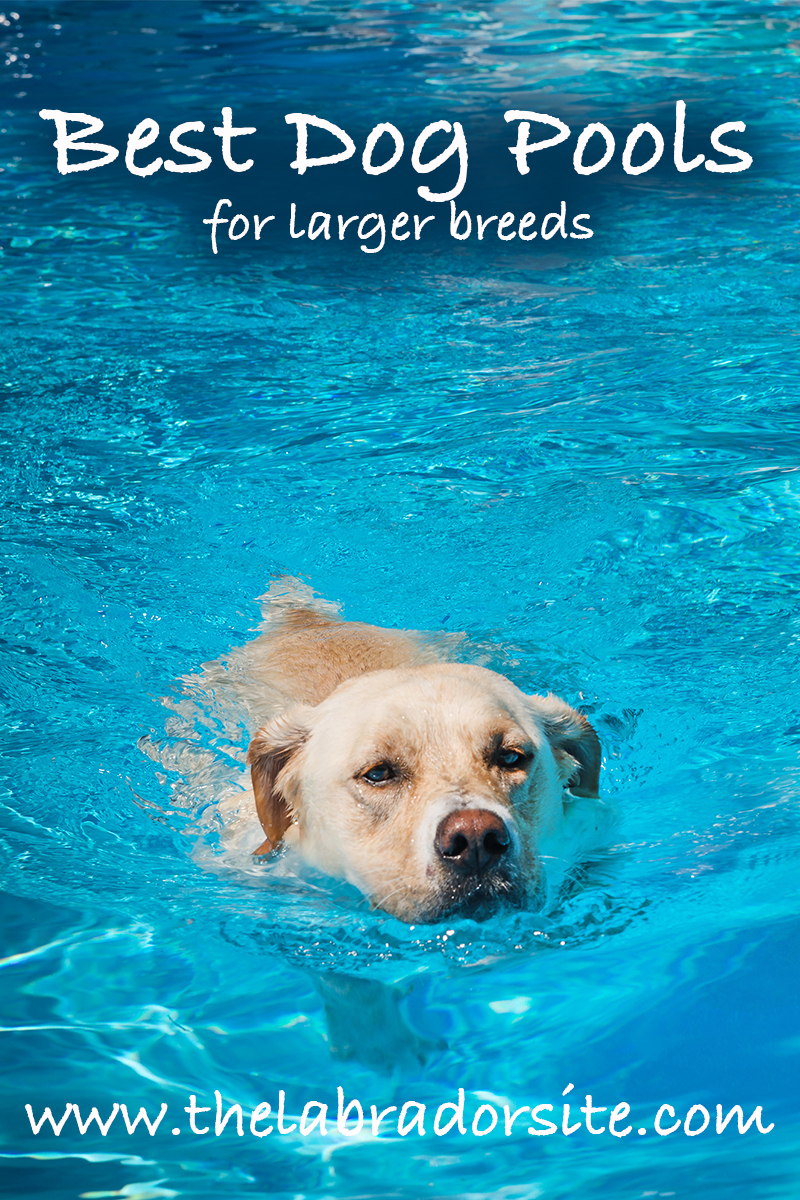 Best Dog Pool For Labradors And Other Large Breeds