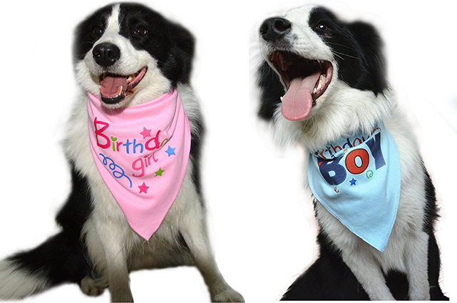 birthday dog bandana