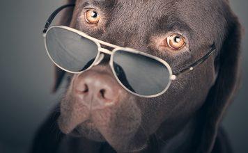 Cool dog names list