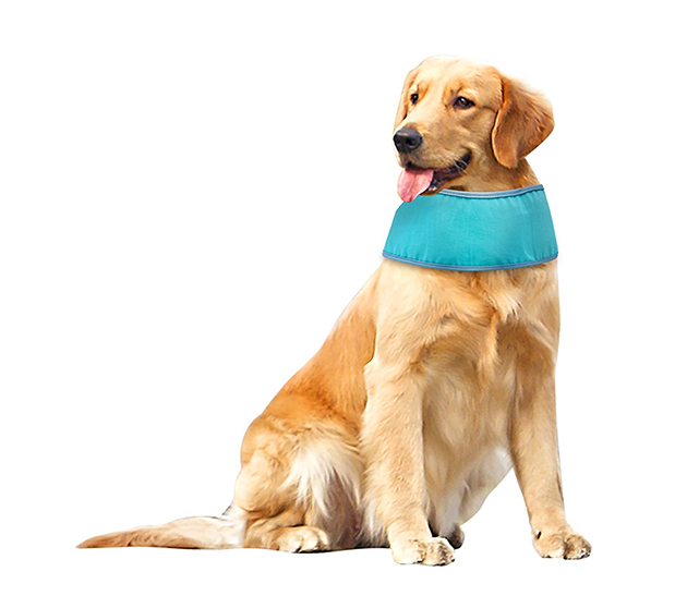 cool dog bandana
