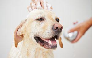 best dog baths for Labradors