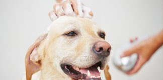 best dog baths for Labradors