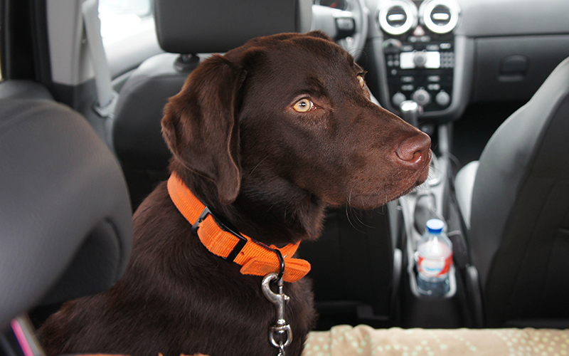 Best Dog Seat Belt >> Best Dog Seat Belt And Car Harness Reviews A Guide To Dog