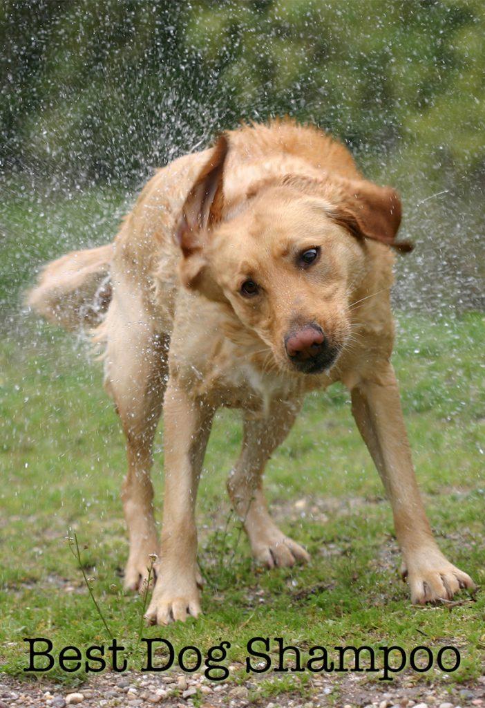 Best Rated Dog Shampio