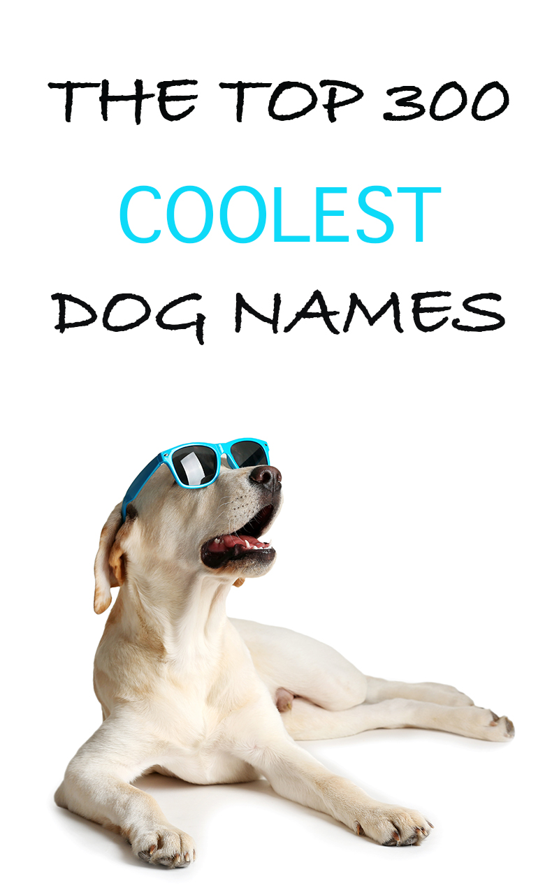 The Best Names For Cool Dogs