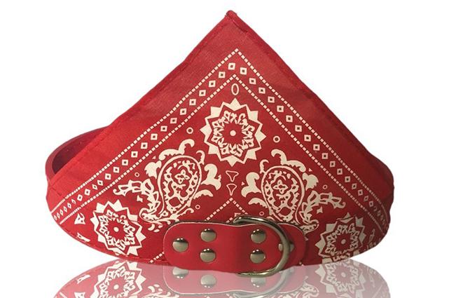 red dog bandana