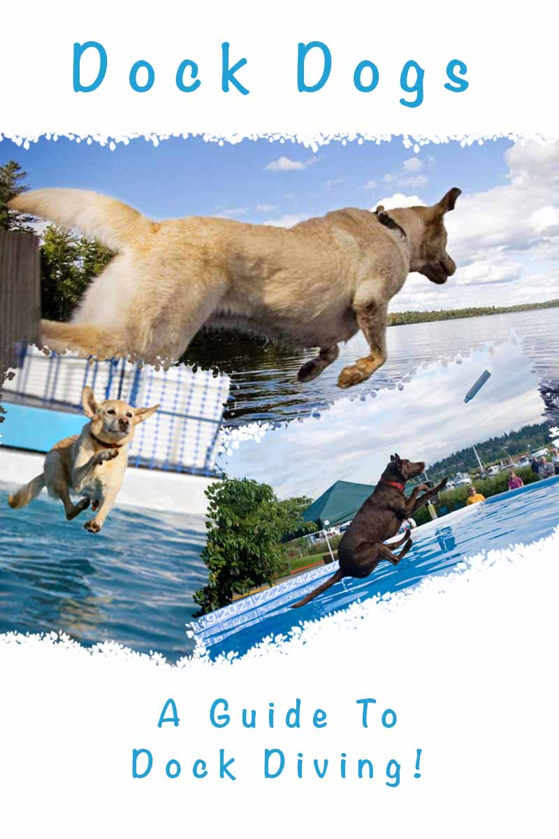 Dock Dogs, A Guide To Dock Diving - Fun activities for dogs.