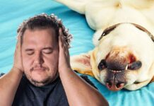 Dog Snoring - Causes, Risks, and Remedies