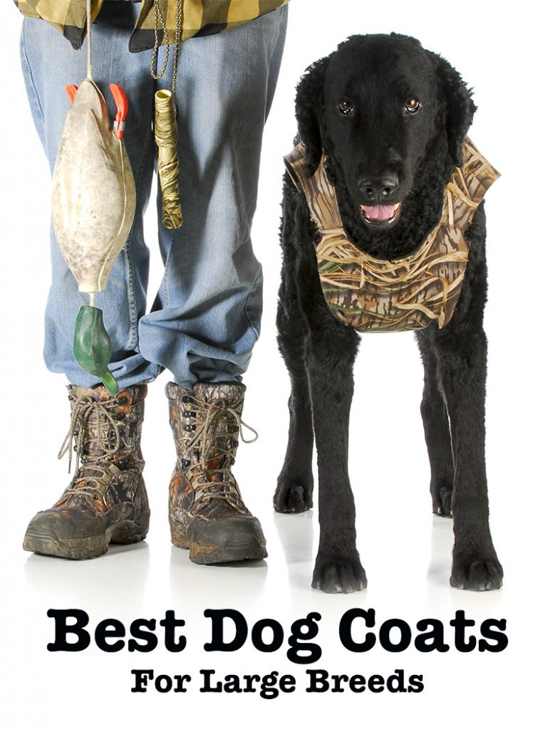 Best Dog Coats For Labs