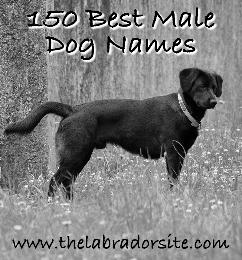 Best Male Dog Names