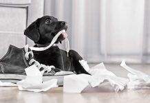 How to stop a dog from chewing
