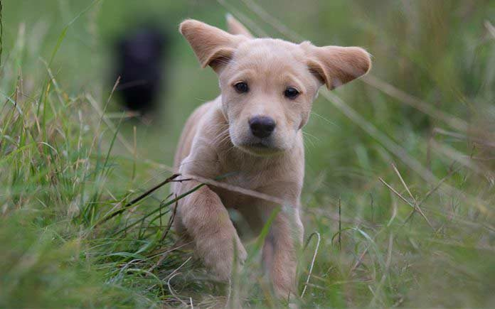 Best and most popular cute dog names
