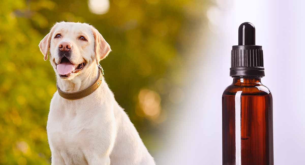 apoquel for dogs