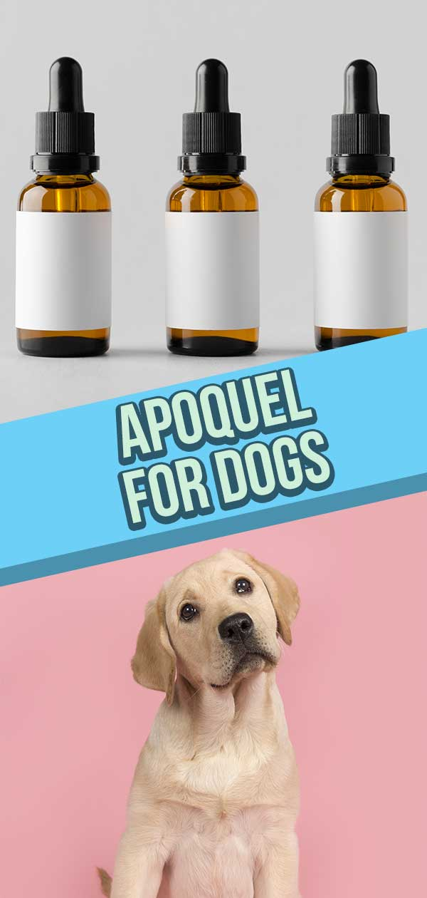 apoquel for dogs
