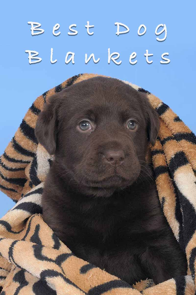 Best dog blankets - Great products for dogs.
