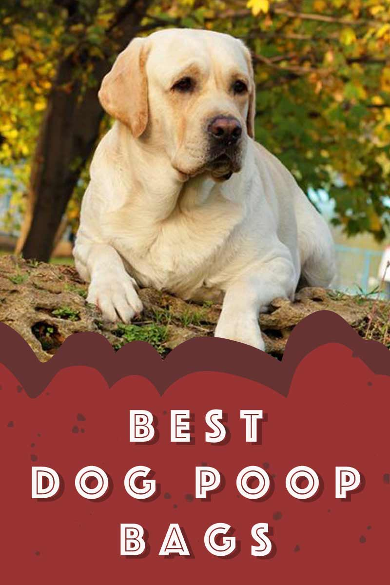 Best Dog Poop Bags - Great products for dogs.