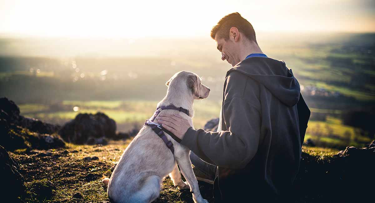 Best No Pull Dog Harness - Reviews And Tips To Help You Choose