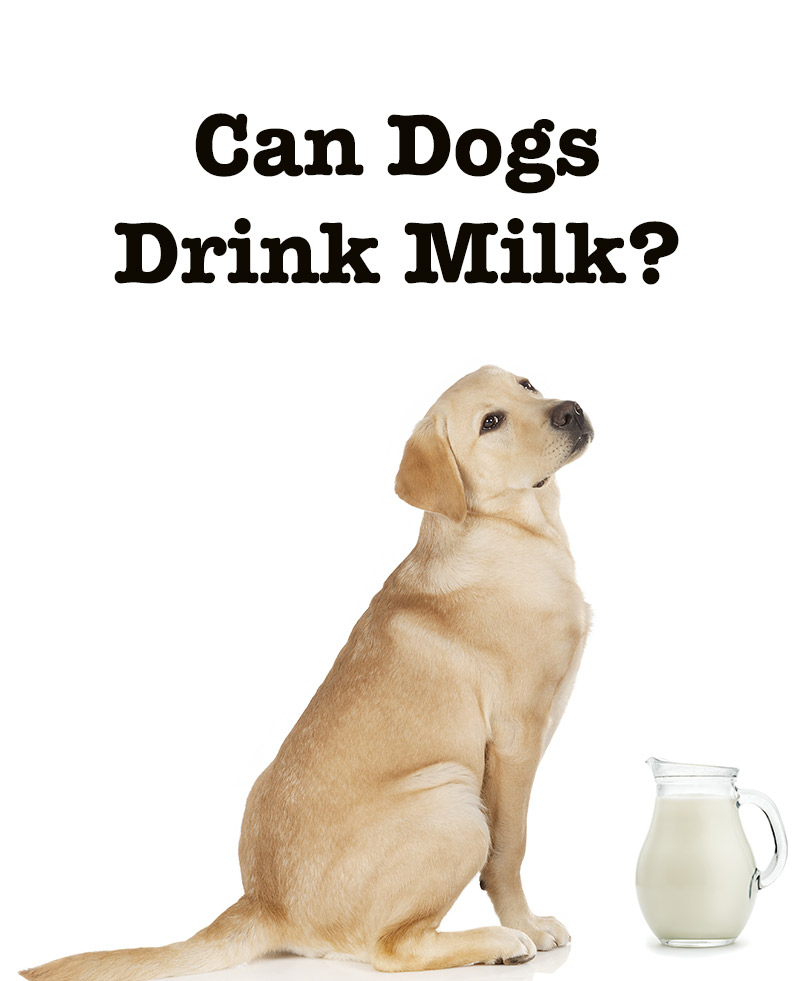 can dogs drink lactose free milk