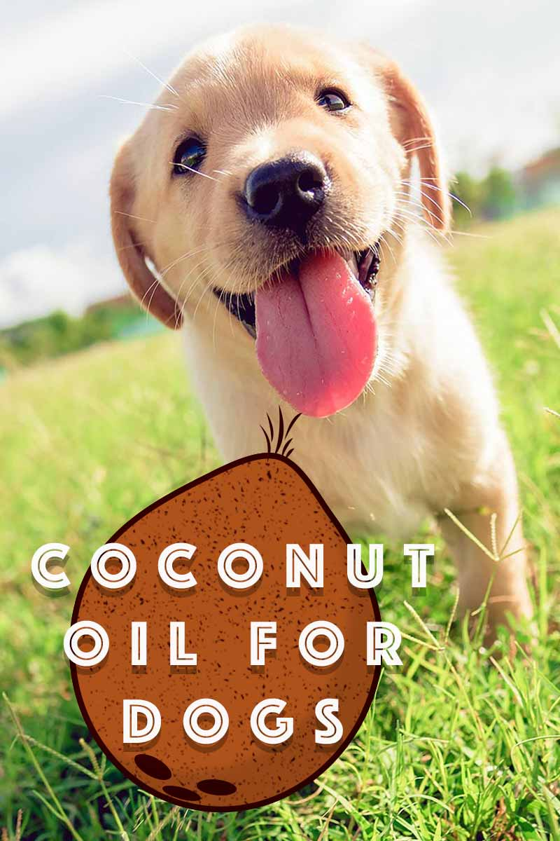 coconut oil for dogs