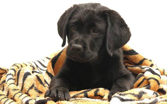 Best Dog Blankets
