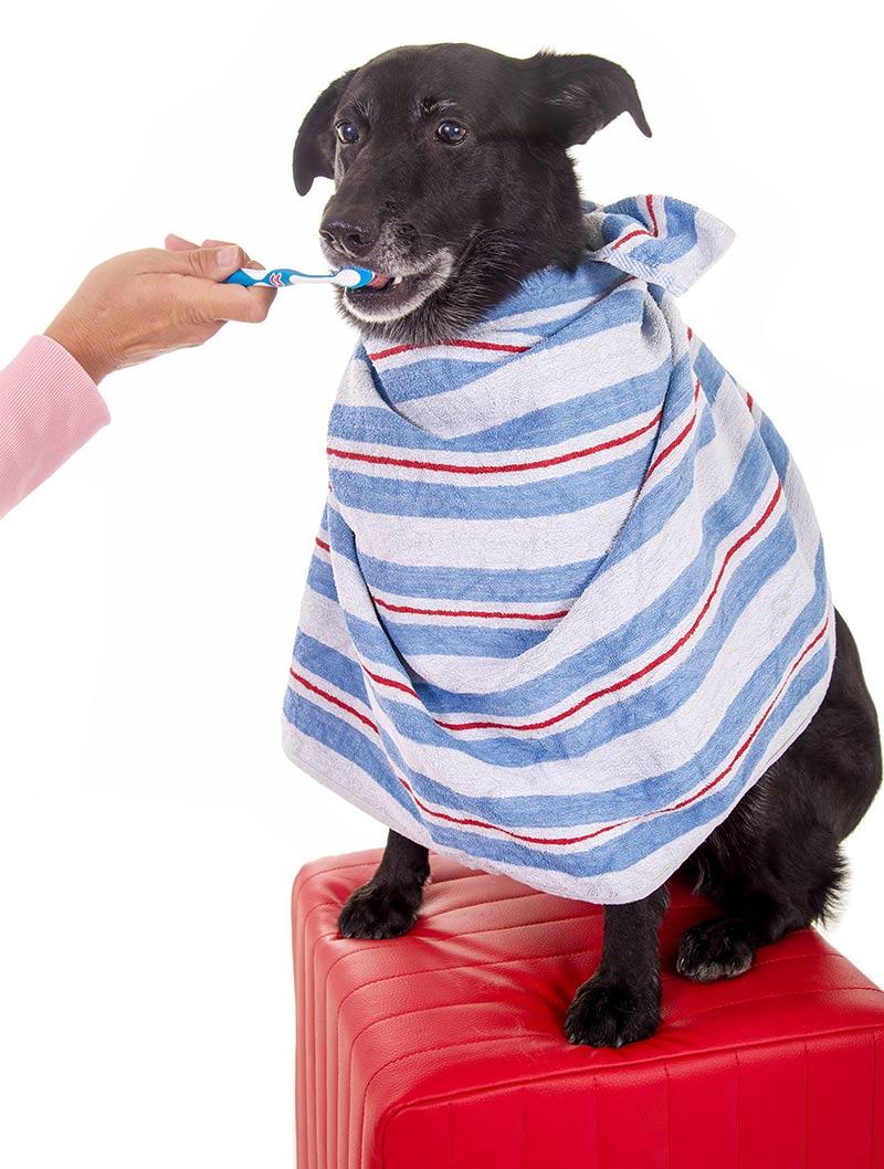 best dog toothpaste