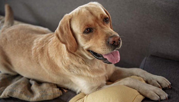 We help you choose the best dog crate furniture