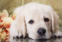 Male Dog Names - 150 Brilliant Boy Puppy Name Ideas