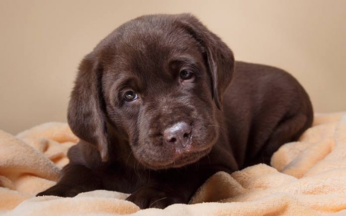 Best bedding option for puppies