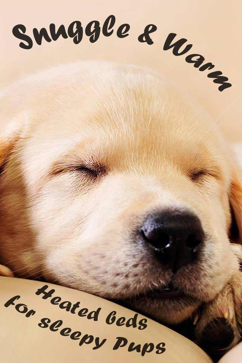 Heated dog beds for sleepy Pups - dog care