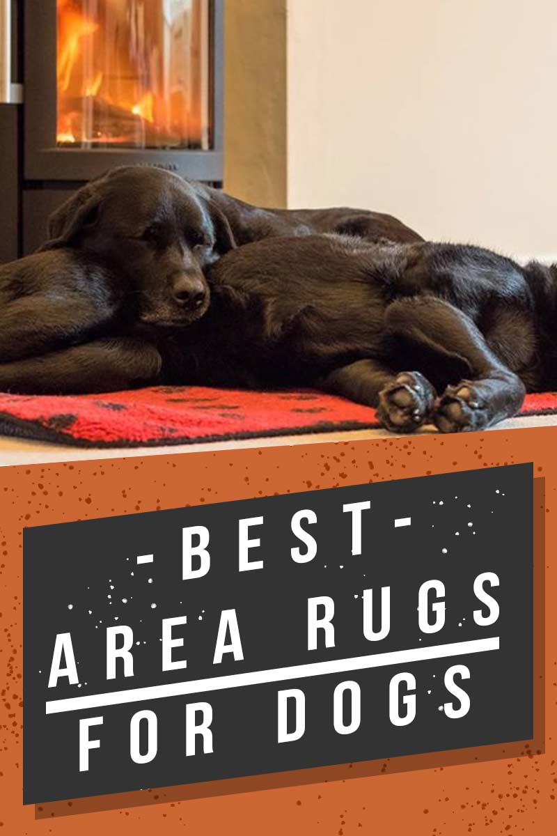 Best Area Rugs For Dogs - Great products for dogs