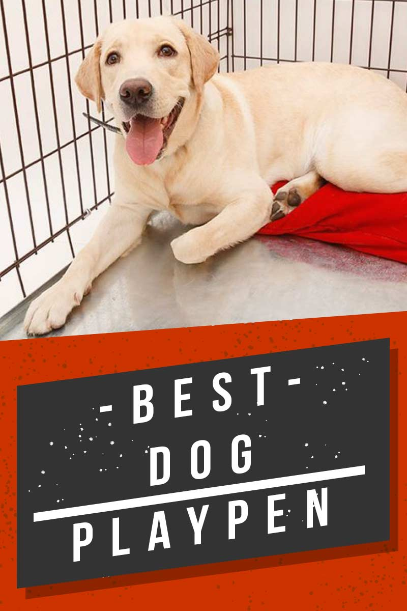 Best dog playpen - Great products for your dog.