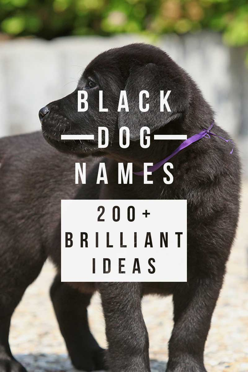 Fabulous Boy Dog Names