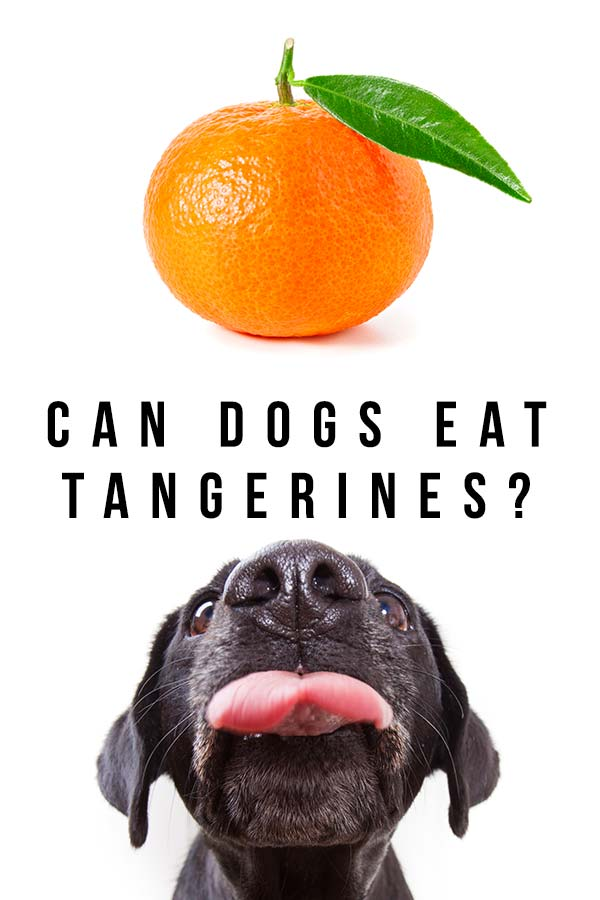 can dogs have tangerines