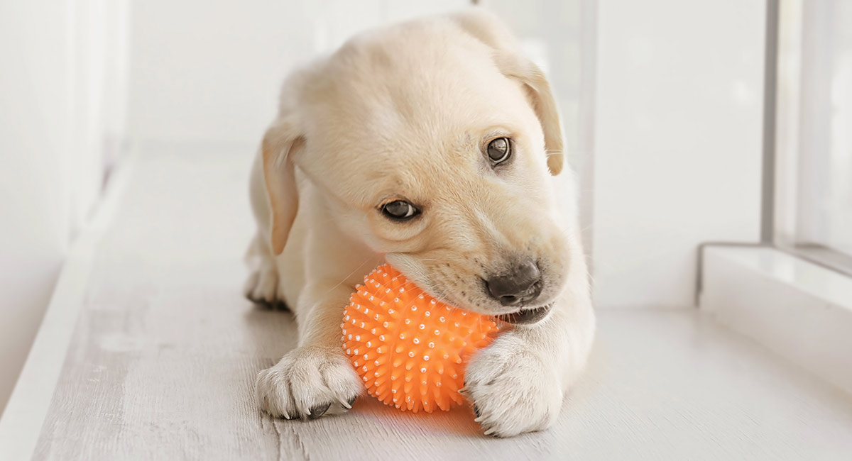 Puppy chewing a ball