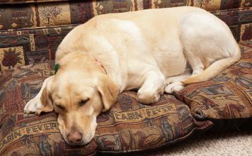 best dog bed for chewers