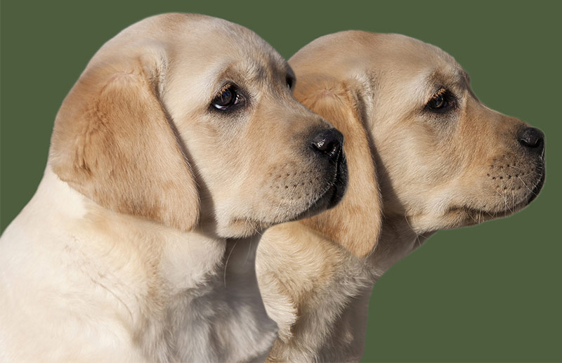 Big Dog Names - Over 350 Awesome Ideas For Large Puppy Naming