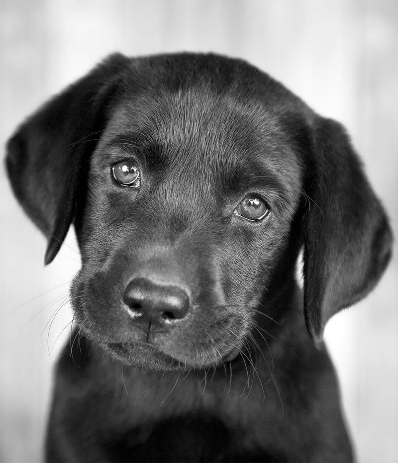 black dog names over 200 inspiring ideas for naming your pup