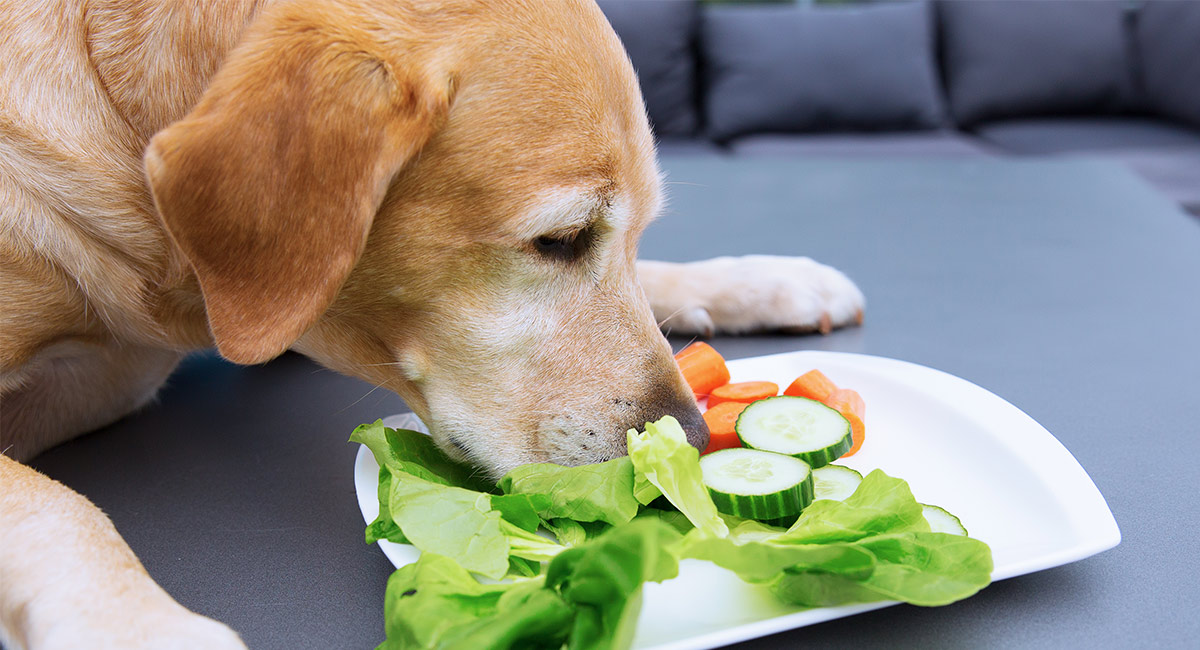 When Should Puppies Start Eating Dog Food