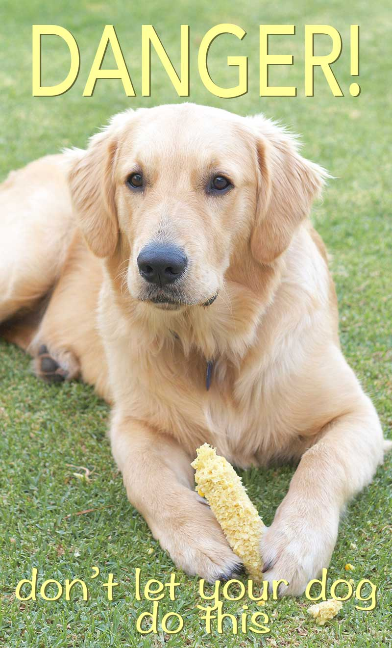 Why dogs should not be given corn on the cob