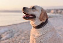 diatomaceous earth for dogs